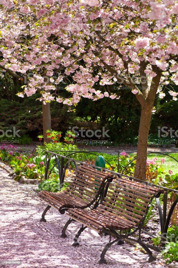 Cherry Tree Park royalty-free stock photo