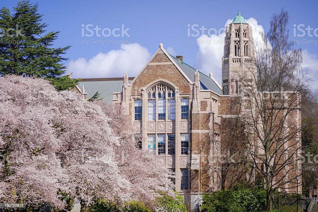 Cherry trees and campus building at University of Washington stock photo