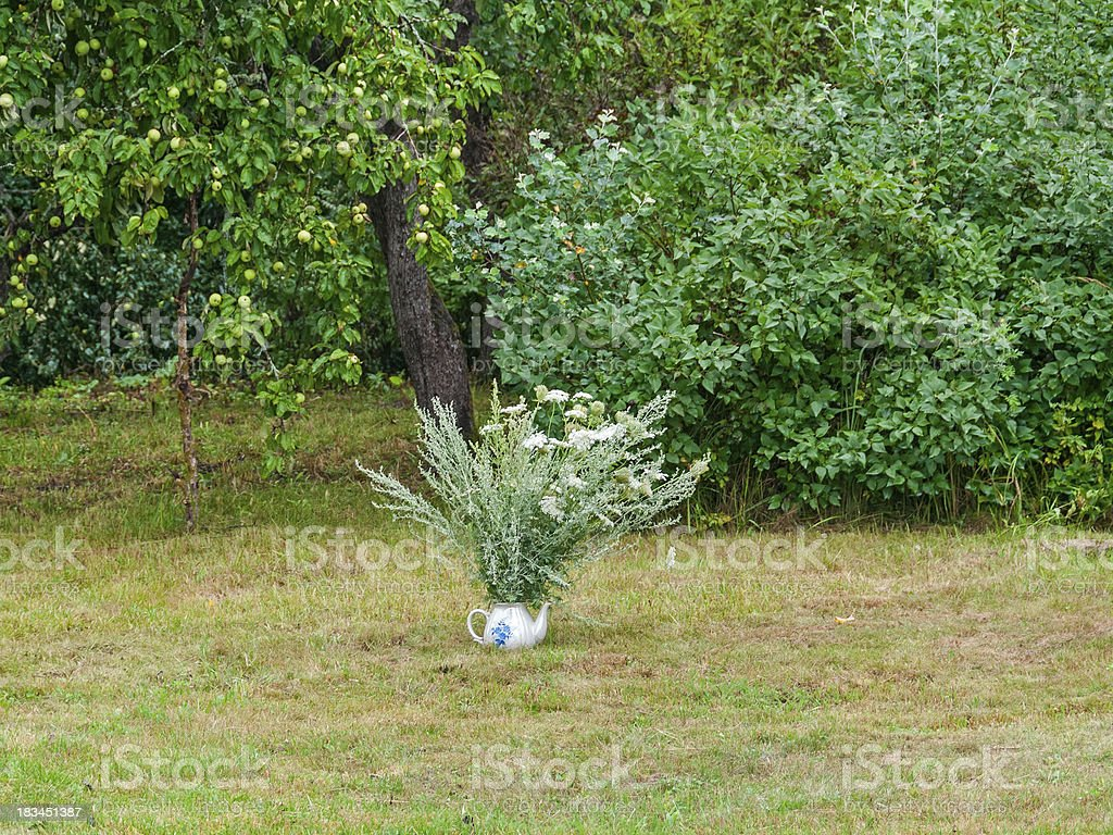 Chervil and wormwood bunch in porcelain teapot before apple tree royalty-free stock photo