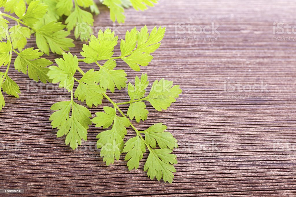 chervil condiment  plant stock photo