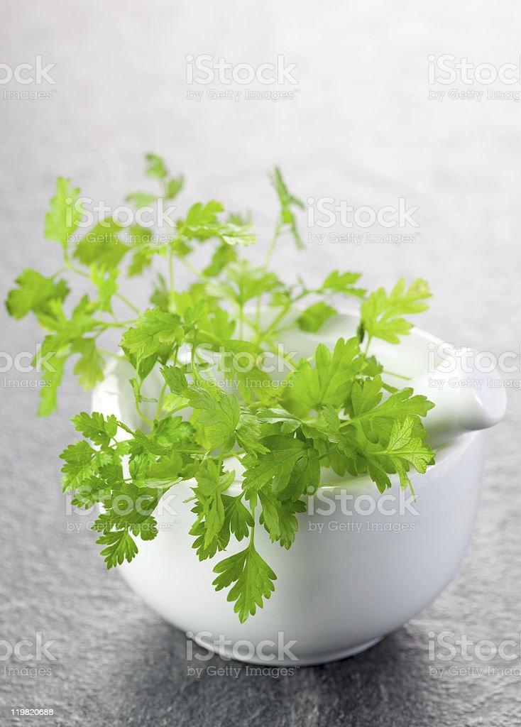 chervil in a mortar stock photo