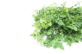 Chervil in a white background