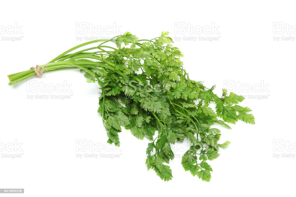 Chervil in a white background stock photo