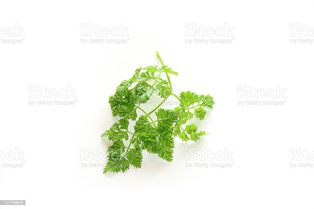 chervil leaf stock photo
