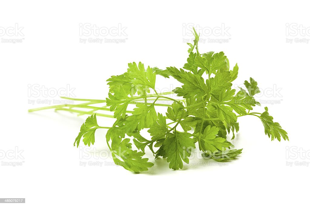 Chervil twig isolated stock photo