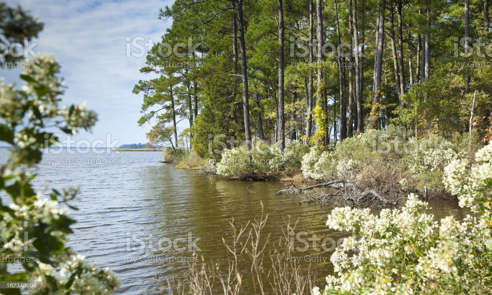 Chesapeake Bay Blackwater royalty-free stock photo