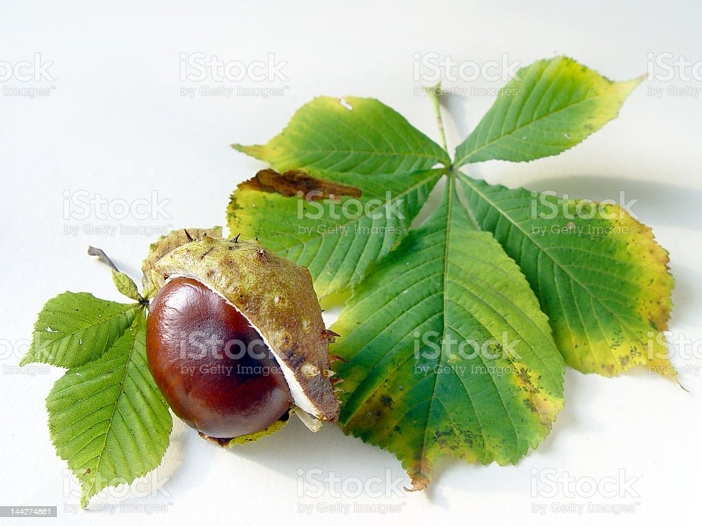 Chestnus and leaves stock photo