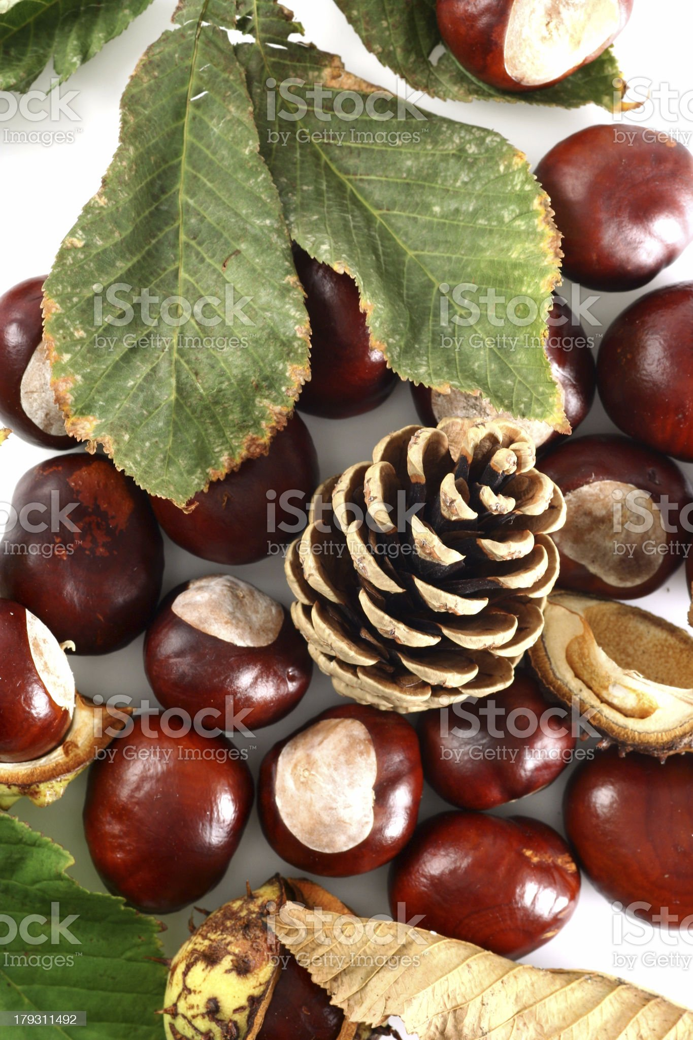 Chestnut at autumn isolated in white background royalty-free stock photo