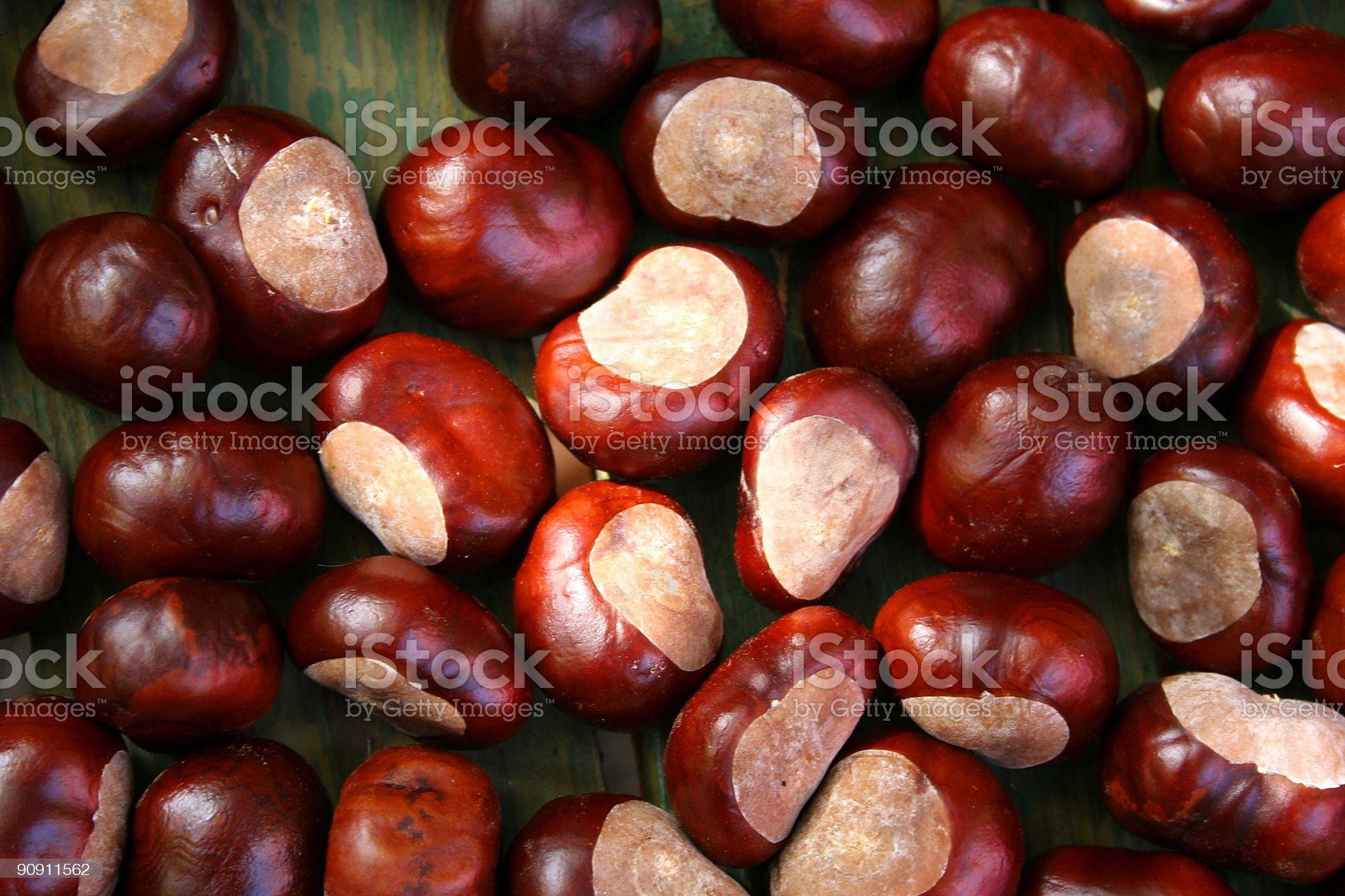 Chestnut. Background royalty-free stock photo