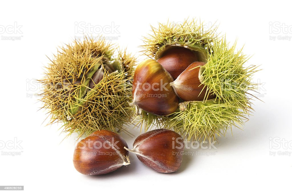 Chestnut close-up stock photo