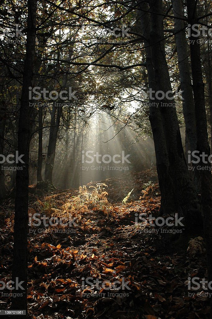 Chestnut Forest #5 stock photo