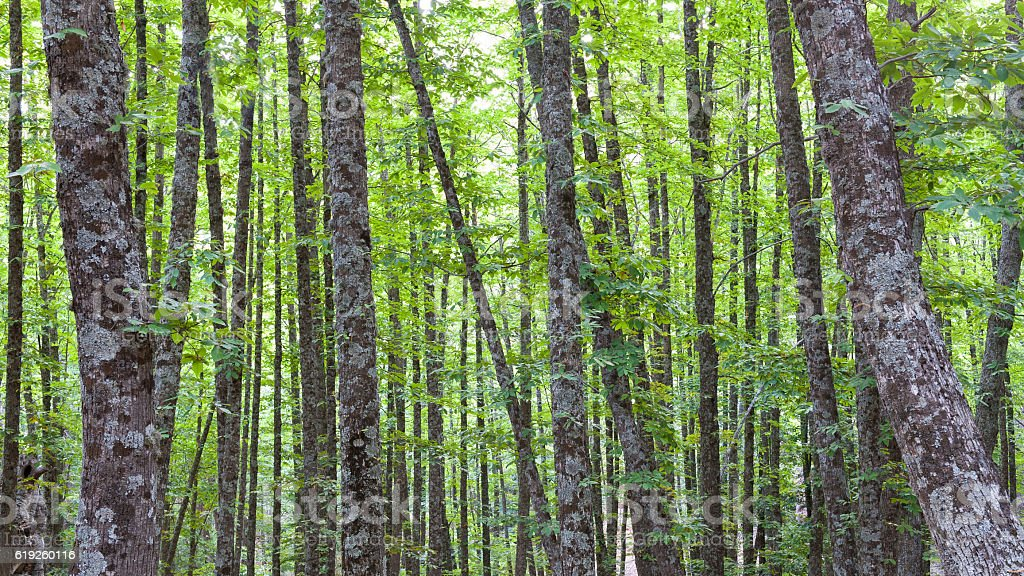 chestnut forest with several sheets from different points of vie stock photo