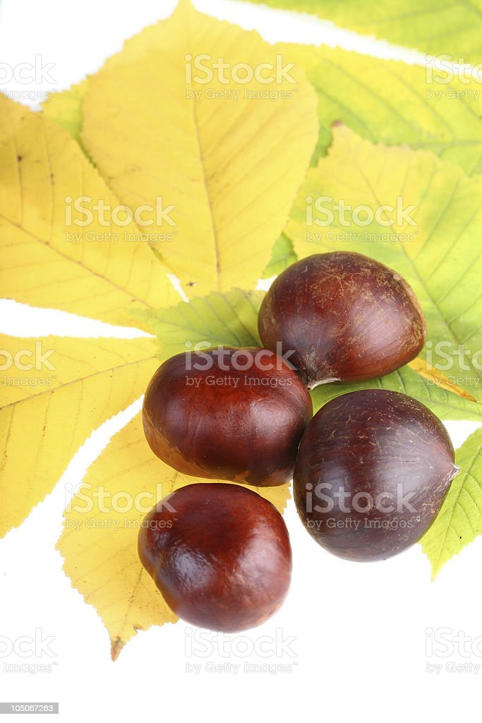 Chestnut fruits lying on yellow leaves stock photo