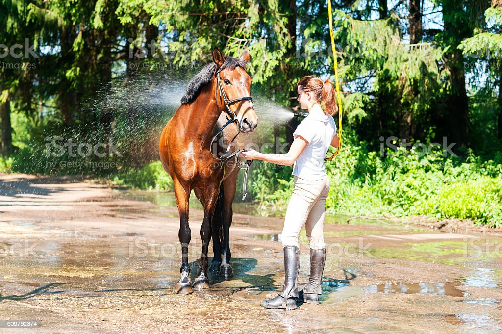 Chestnut horse enjoying of cooling down in the summer shower stock photo