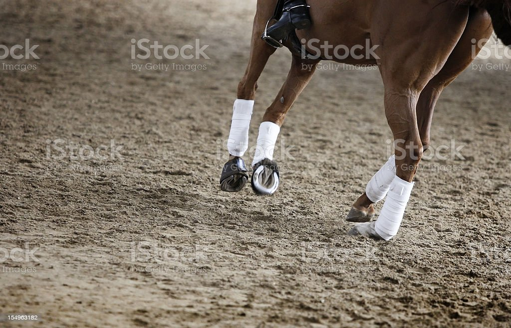 A chestnut horse in a sandy arena stock photo