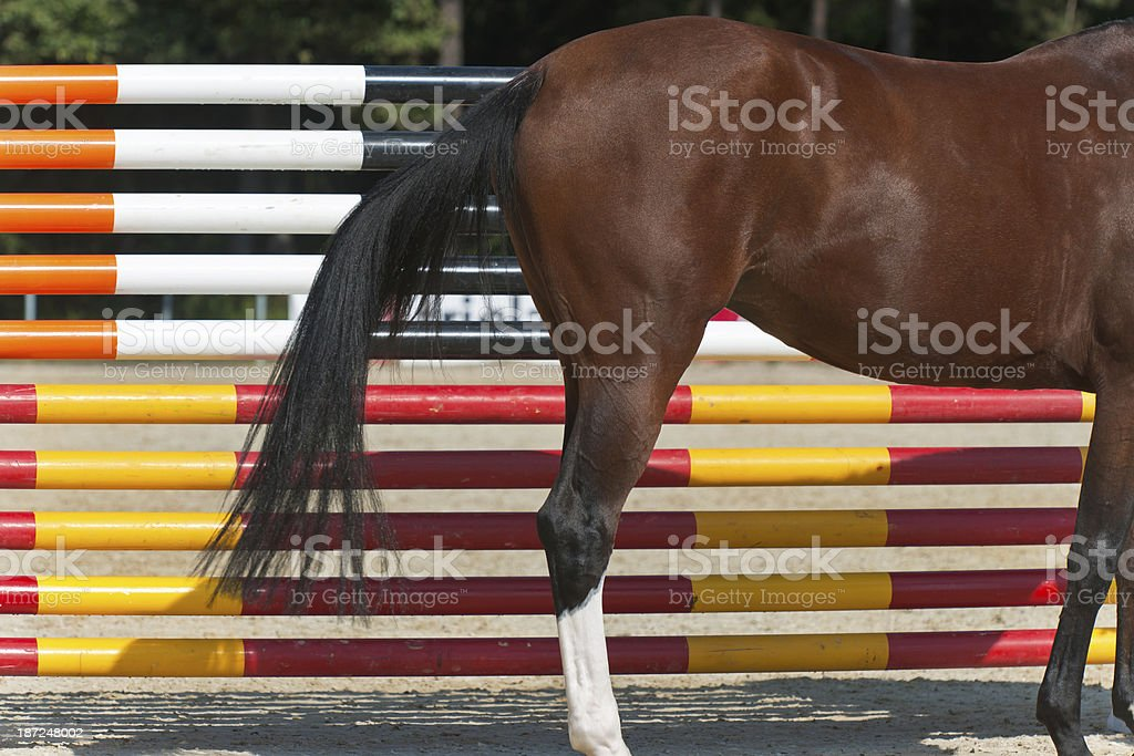 Chestnut Horse in Front of Red-Yellow Hurdle stock photo
