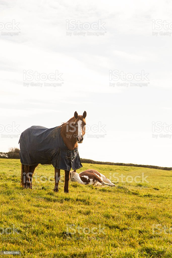 chestnut horse in paddock stock photo
