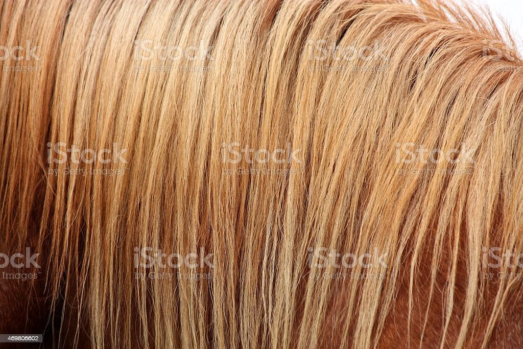 Chestnut horse mane close up stock photo
