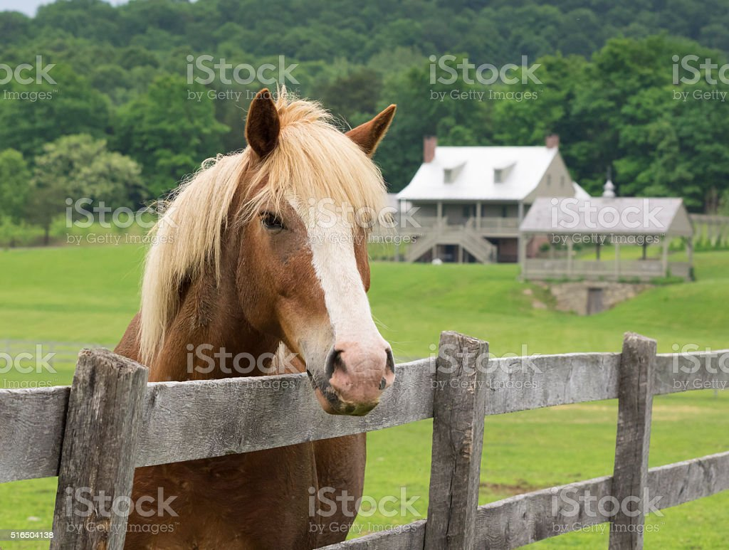 Chestnut Horse near Pasture Fence stock photo