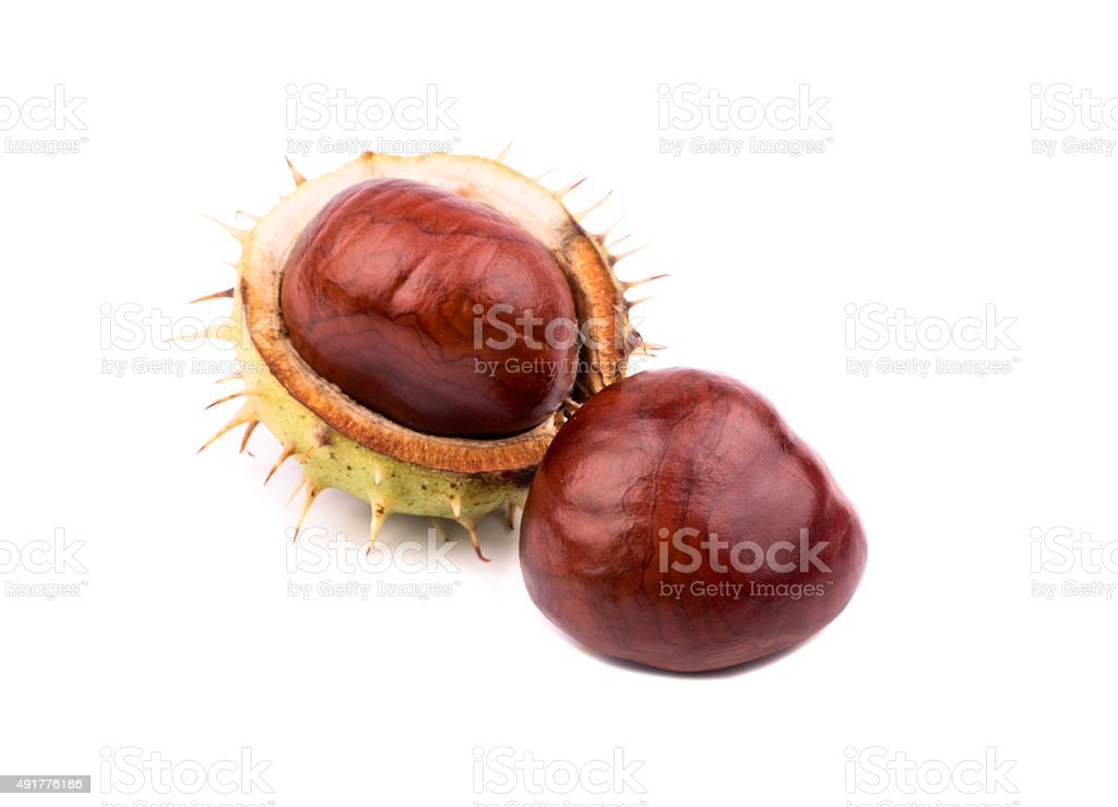 Chestnut in shell stock photo