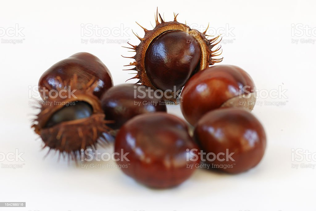 chestnut macro royalty-free stock photo