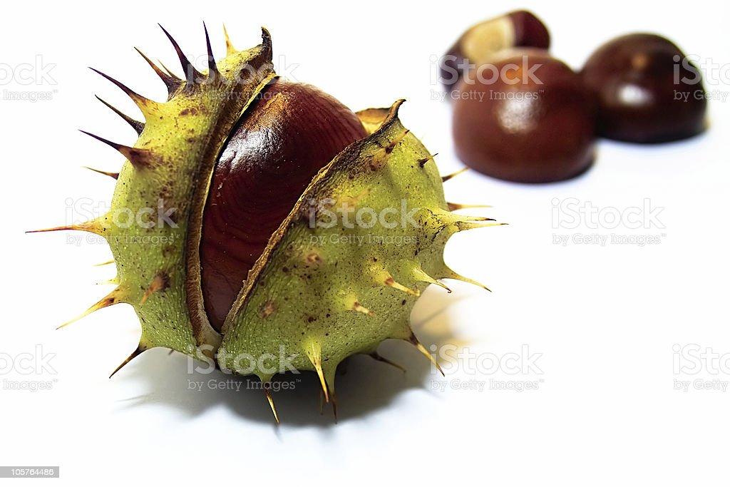 Chestnut royalty-free stock photo