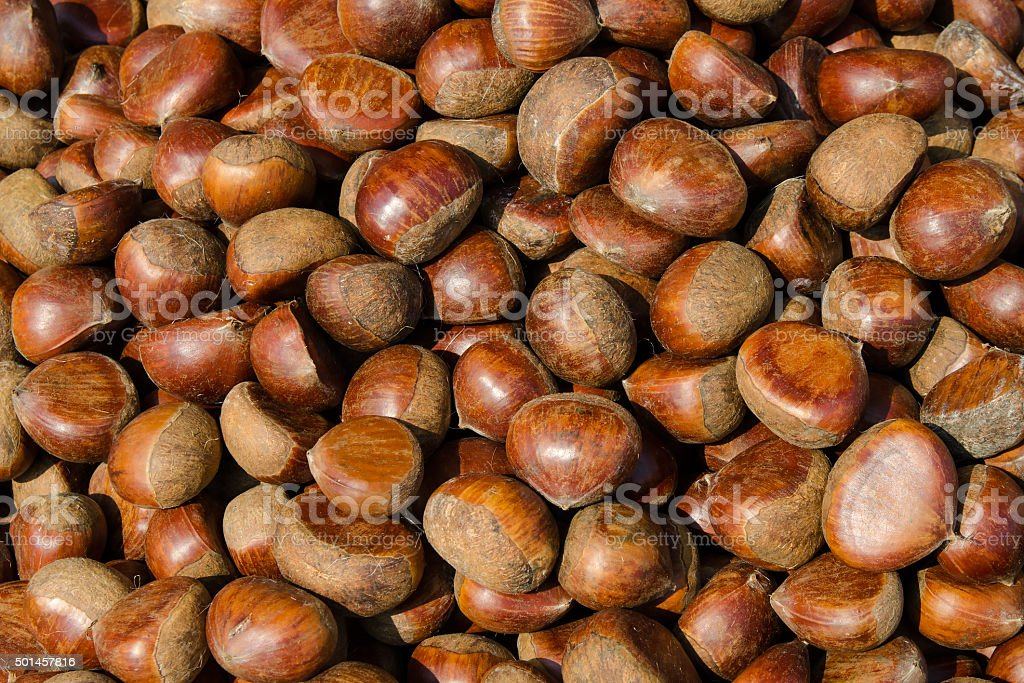 Chestnut - Stock image stock photo