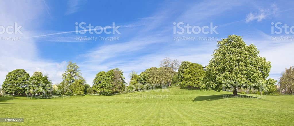 chestnut tree panorama,  the top of hill royalty-free stock photo