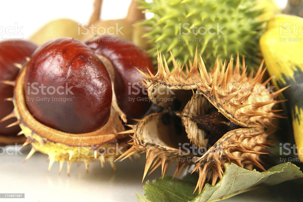 chestnuts and jimsonweed royalty-free stock photo