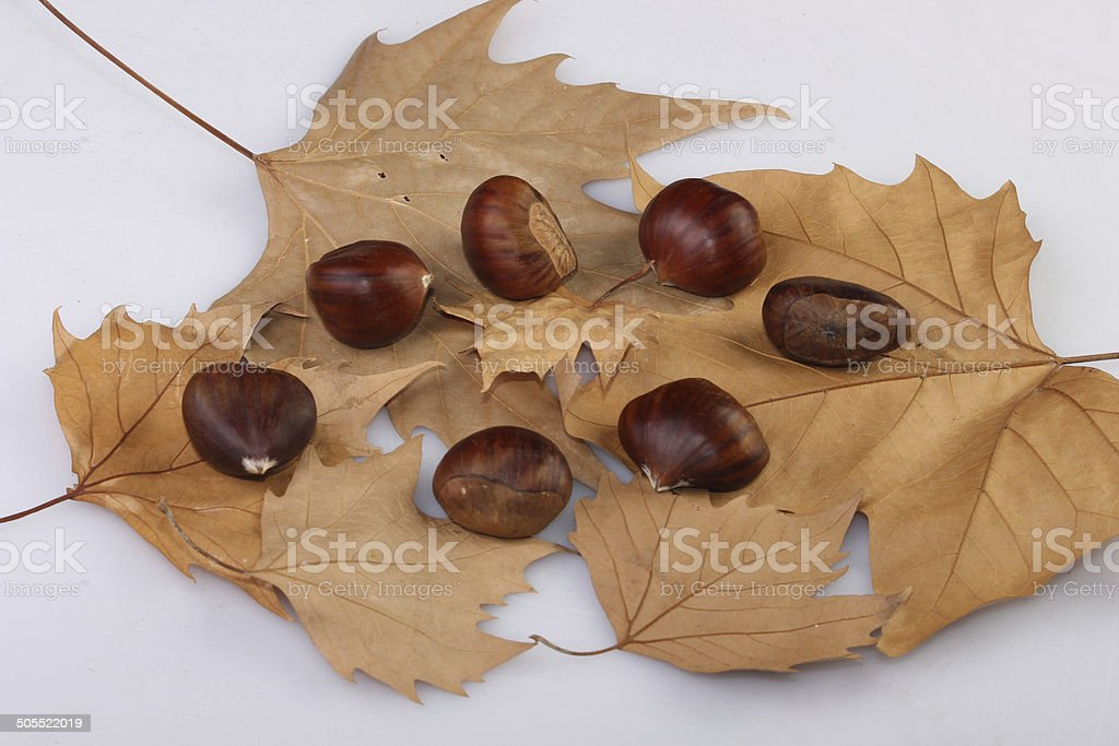 chestnuts and leaves composition royalty-free stock photo