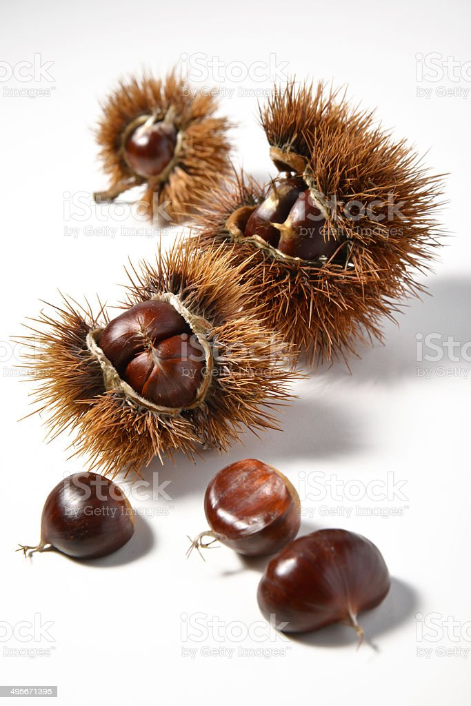 Chestnuts and Urchins stock photo