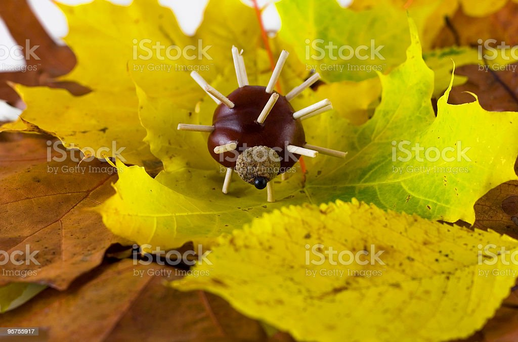 chestnuts hedgehog stock photo