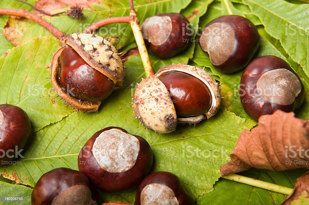 Chestnuts on blanket of leaves royalty-free stock photo