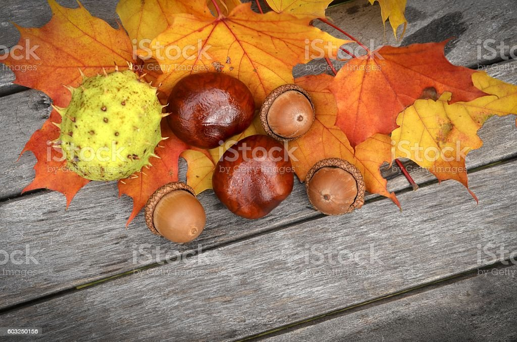 Chestnuts on old wood. stock photo