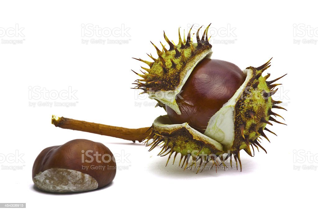 Chestnuts on white background royalty-free stock photo