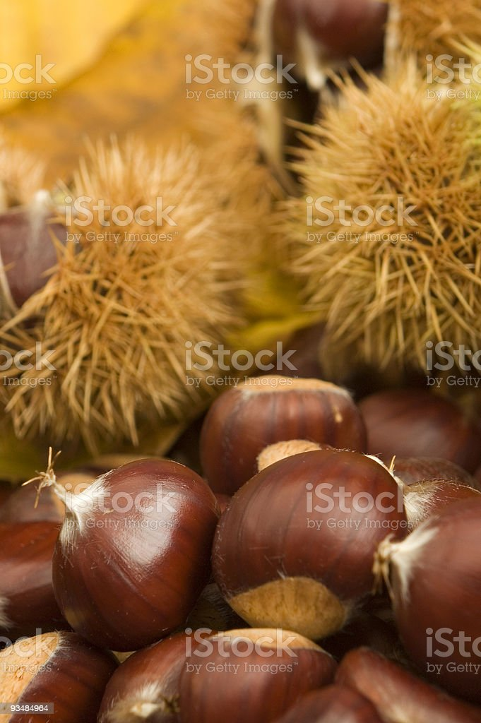chestnuts royalty-free stock photo