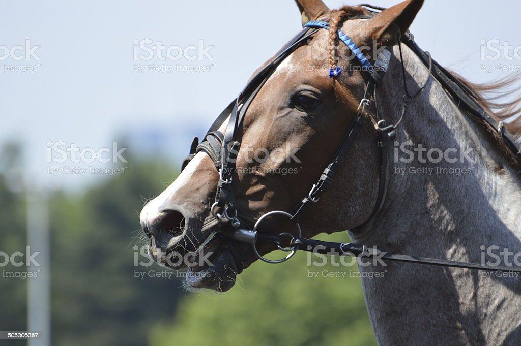 cheval de course stock photo