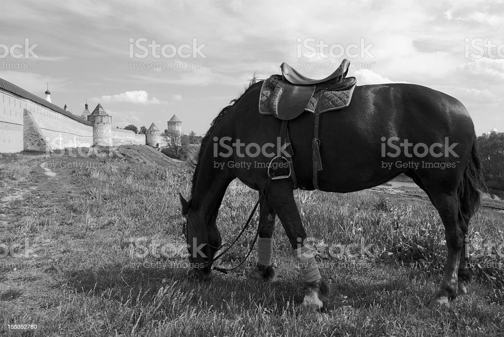 Cheval noir broutant stock photo