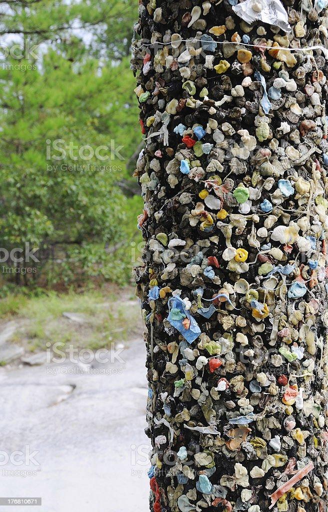 Chewing Gum Tree stock photo