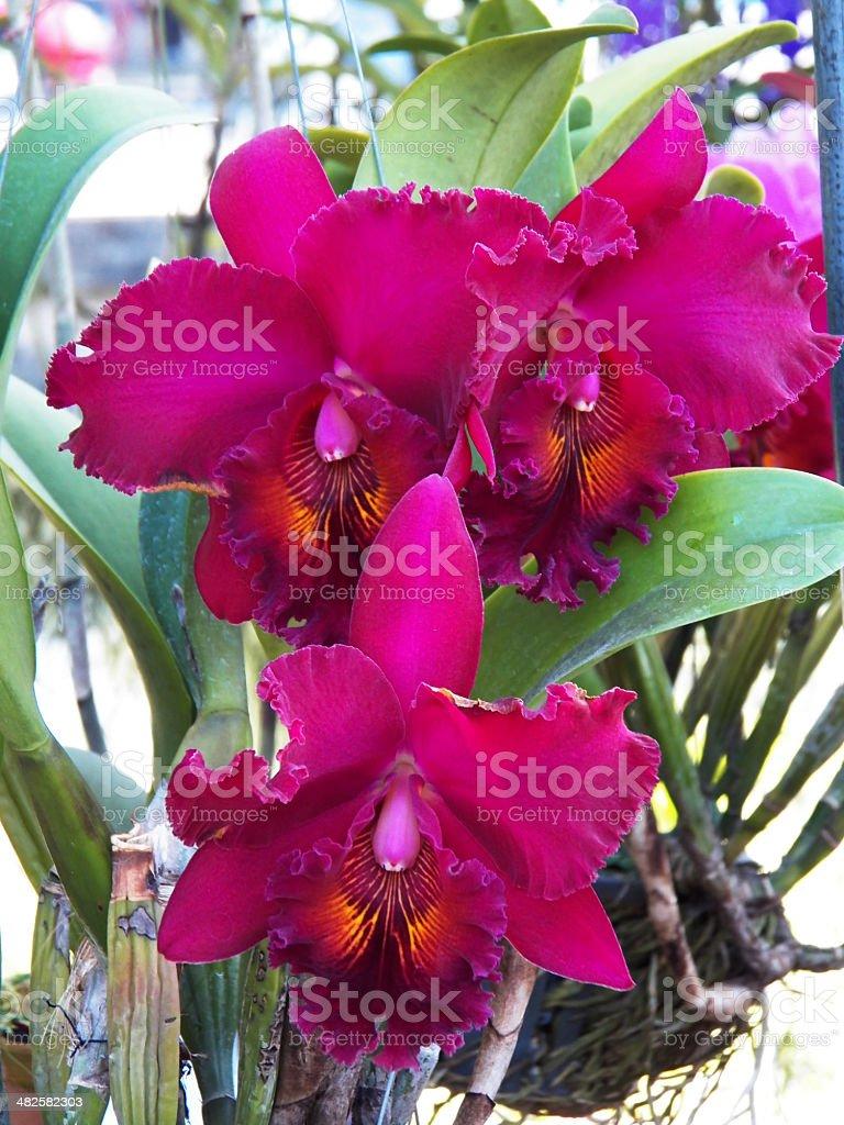 chia lin and catt earl flower stock photo