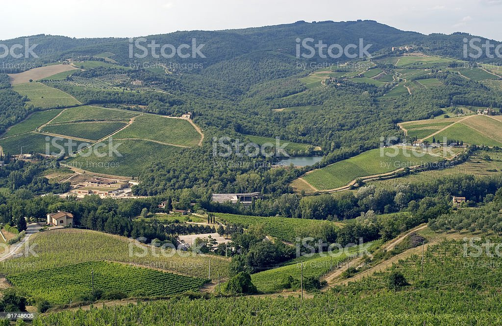 Chianti landscape near Radda, with vineyards and olive trees stock photo