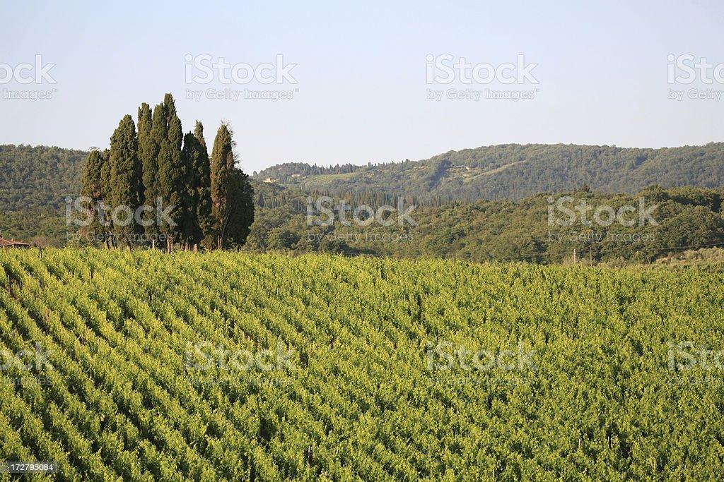 Chianti vineyard and cypresses royalty-free stock photo