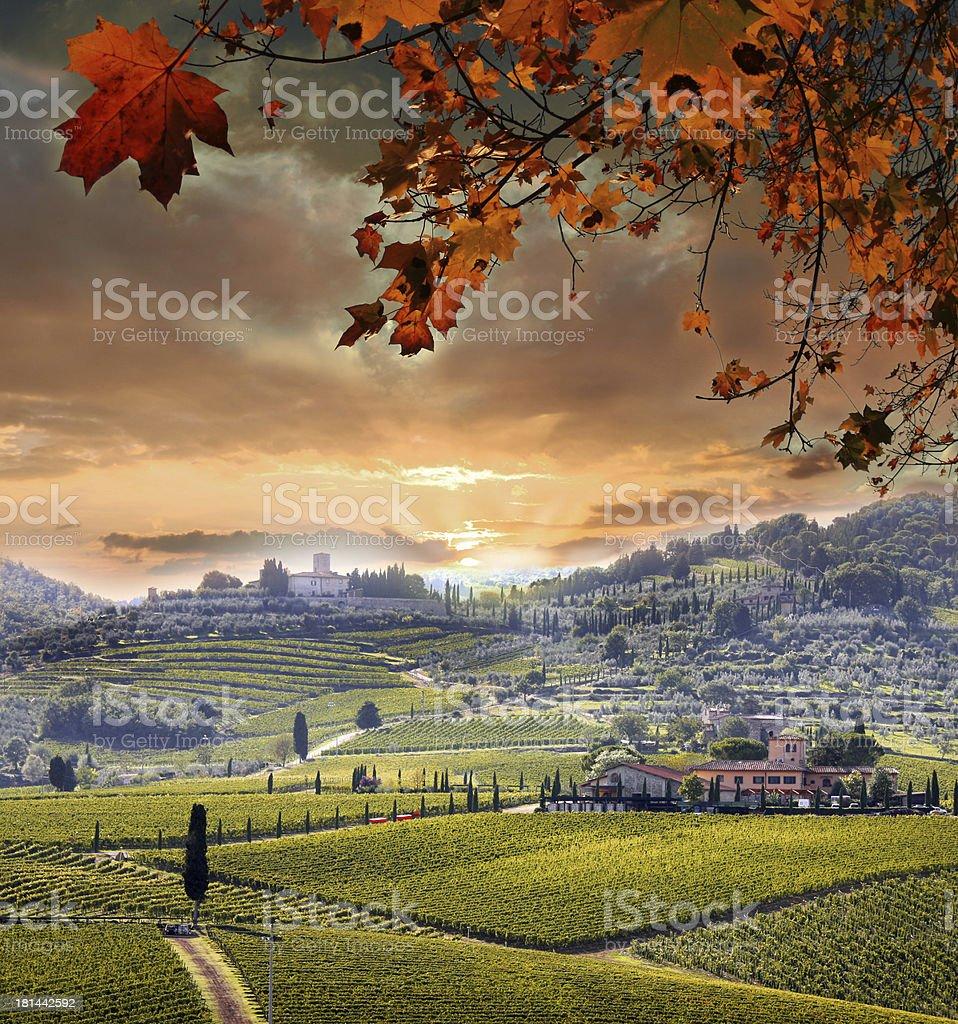 Chianti vineyard in Tuscany  Italy royalty-free stock photo