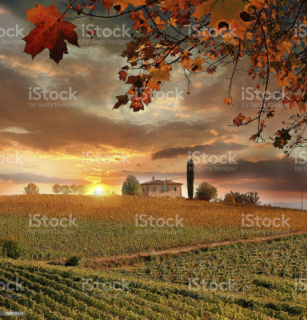 Chianti vineyard in Tuscany  Italy stock photo