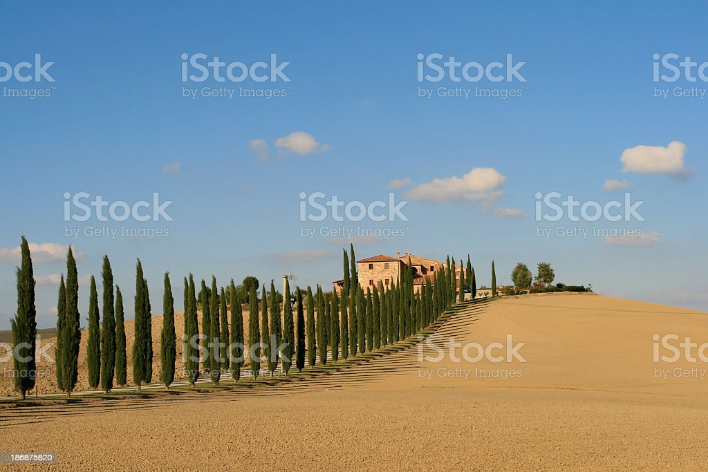 Chianti Vineyard on Sunny Day, Italy royalty-free stock photo