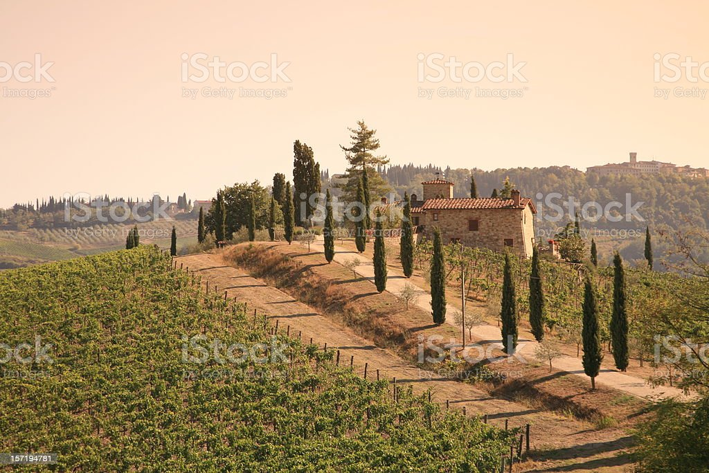 Chianti Volpaia Vineyard in Sunset royalty-free stock photo