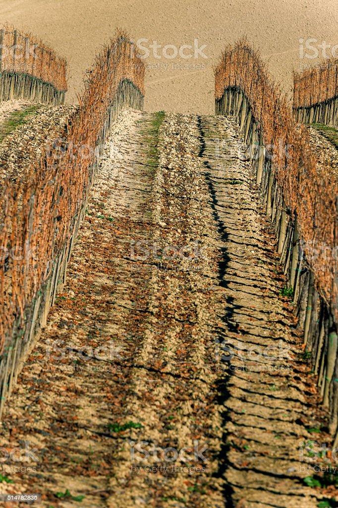 Chianti Volpaia Vineyard in Sunset,Tuscany,Italy stock photo
