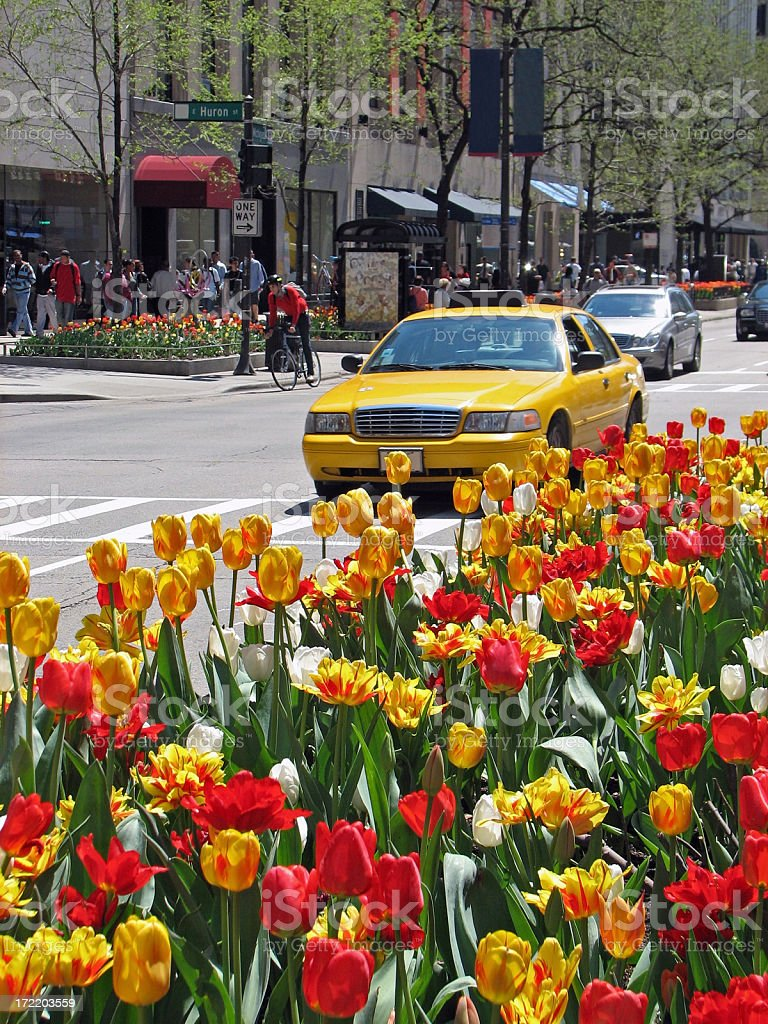 Chicago Michigan Avenue and Tulips royalty-free stock photo