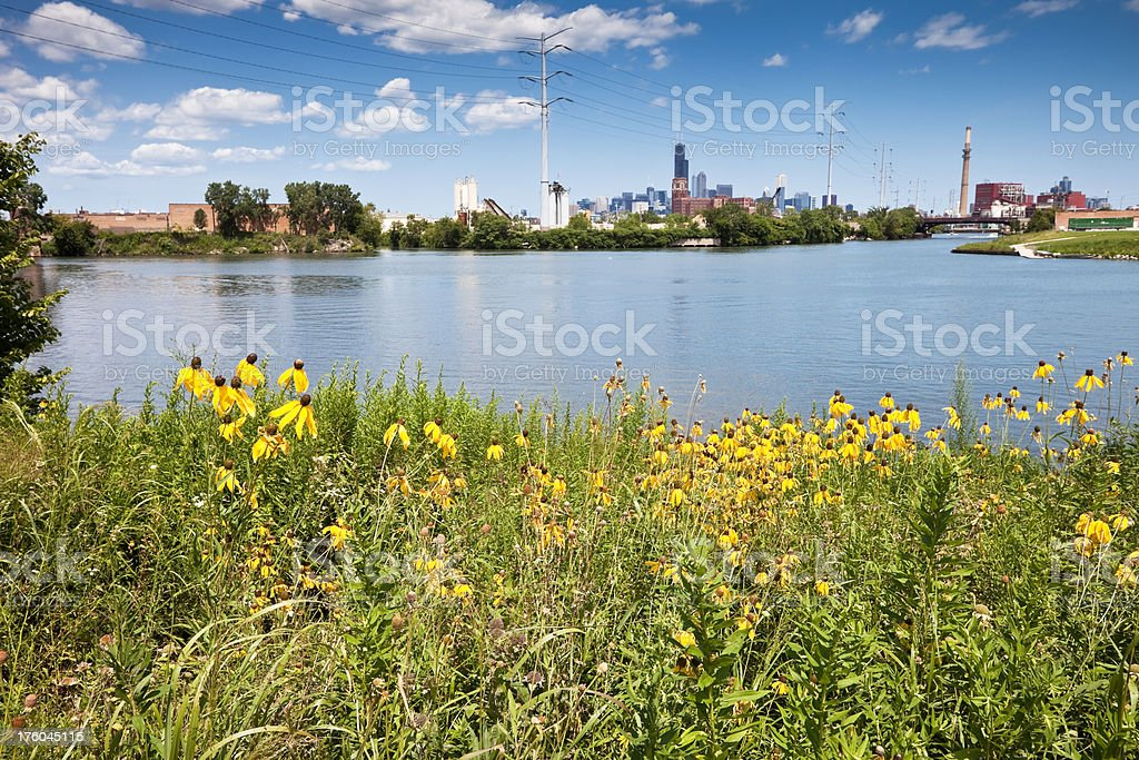 Chicago, River and Prairie Flowers stock photo