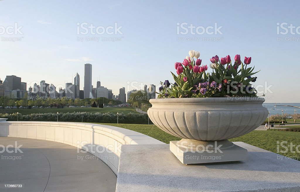 Chicago Skyline and Flowers royalty-free stock photo